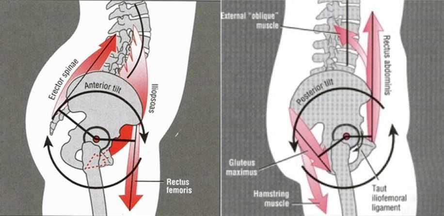 Anatomy Of A Squat Part 2 The Roll Of The Hip In A Squat Sports